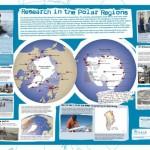Bases polares